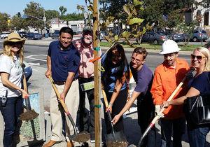 Tree-planting effort